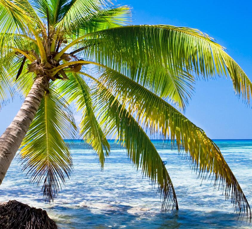 Beach in Haiti under a radiant sun.